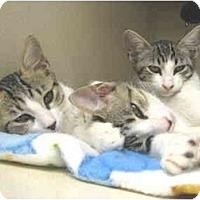 Adopt A Pet :: Cami,Cassie, Carlie - Mesa, AZ