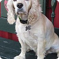 Adopt A Pet :: Gem - Sugarland, TX