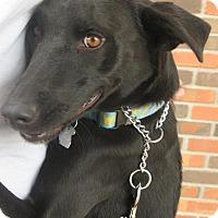 Adopt A Pet :: Axle - Phoenix, AZ