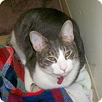 Adopt A Pet :: Marlee - Scottsdale, AZ