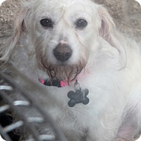 Adopt A Pet :: Mirabelle - adoption pending - Norwalk, CT
