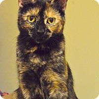 Adopt A Pet :: Sparky - Island Park, NY