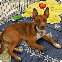 Adopt A Pet :: Brutus - Phoenix, AZ