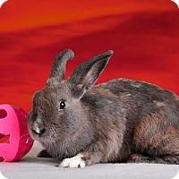 Adopt A Pet :: Vickie - Marietta, GA