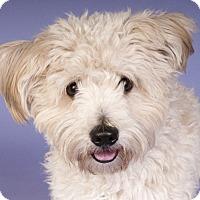 Adopt A Pet :: Glenn - Chicago, IL