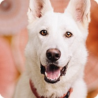 Adopt A Pet :: Kaiya - Portland, OR