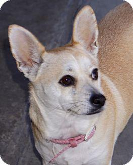 Terrier (Unknown Type, Medium) Mix Dog for adoption in La Habra Heights, California - Romi