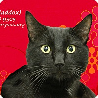 Adopt A Pet :: BUB (aka MADDOX) - Monrovia, CA