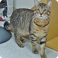 Adopt A Pet :: Todd - Chambersburg, PA