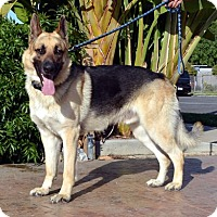 Adopt A Pet :: Roscoe - Irvine, CA