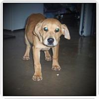 Adopt A Pet :: KIKI - Medford, WI