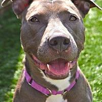 Adopt A Pet :: Tabitha - Buffalo, NY