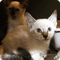 Adopt A Pet :: Sushi - Metairie, LA