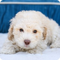 Adopt A Pet :: Bentley - Auburn, CA