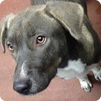 Adopt A Pet :: Snooki - Spokane, WA