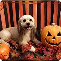Adopt A Pet :: Max - Sharon, CT