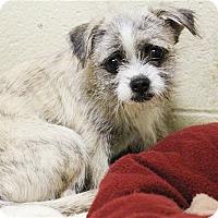 Adopt A Pet :: Nellie - Elyria, OH