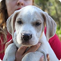 Adopt A Pet :: Side Kick - Groveland, FL