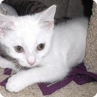 Adopt A Pet :: Astra - Columbus, OH