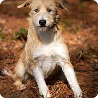 Adopt A Pet :: Tessa - Meridian, MS