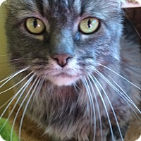 Adopt A Pet :: Holly - Chula Vista, CA