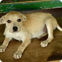 Adopt A Pet :: Burrito - San Antonio, TX