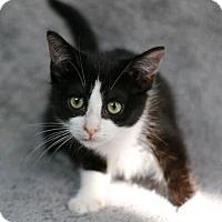 Adopt A Pet :: Ikora - Raleigh, NC