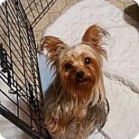 Adopt A Pet :: Lourdes - Lorain, OH