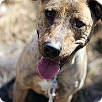 Adopt A Pet :: Groove - Tinton Falls, NJ