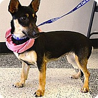 Adopt A Pet :: Izzabella too cute - Sacramento, CA