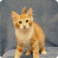 Adopt A Pet :: Grumpy - Sacramento, CA