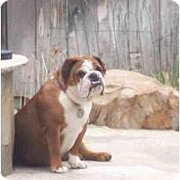 Adopt A Pet :: Hanalei - San Diego, CA
