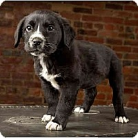 Adopt A Pet :: Miracle - Owensboro, KY