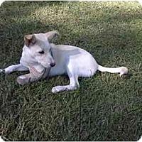 Adopt A Pet :: Annie - Conyers, GA