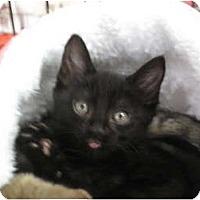 Adopt A Pet :: Booda - Port Republic, MD