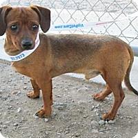 Adopt A Pet :: MELA - Portland, OR