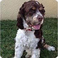 Adopt A Pet :: Jack 2 - San Diego, CA