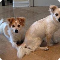 Adopt A Pet :: Parker - La Habra, CA