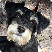 Adopt A Pet :: Nova - Orlando, FL