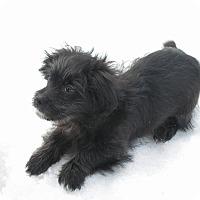 Adopt A Pet :: Fonzie - Rigaud, QC