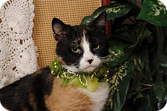 Calico Cat for adoption in mishawaka, Indiana - Libby