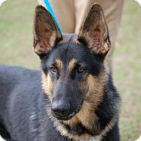 Adopt A Pet :: Rex AD 02-18-16 - Preston, CT