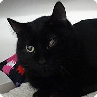 Adopt A Pet :: Mabel - Elyria, OH