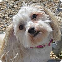 Adopt A Pet :: Suzy - Meridian, ID