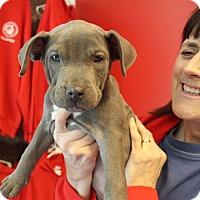 Adopt A Pet :: Blossom - Elyria, OH