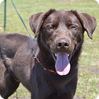 Adopt A Pet :: Jackson - Larned, KS