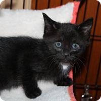 Adopt A Pet :: LeAnn H - Melbourne, FL