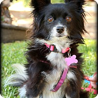 Adopt A Pet :: Molly - Thousand Oaks, CA