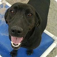 Adopt A Pet :: Carly - Pembroke, GA