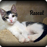 Adopt A Pet :: Rascal - Sherman Oaks, CA